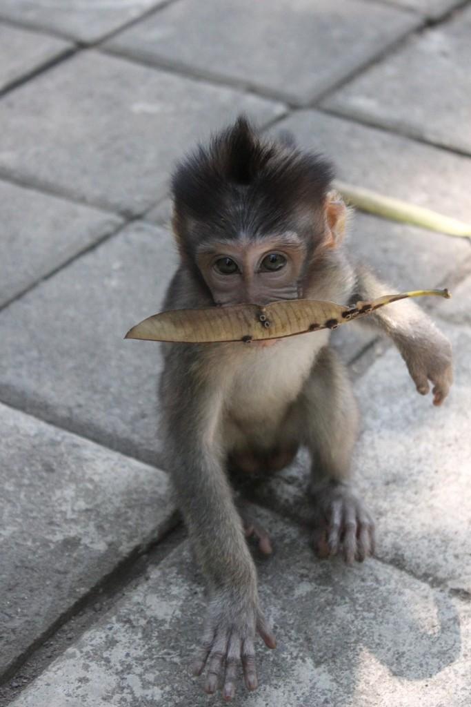 Baby Monkey Forest Ubud Bali