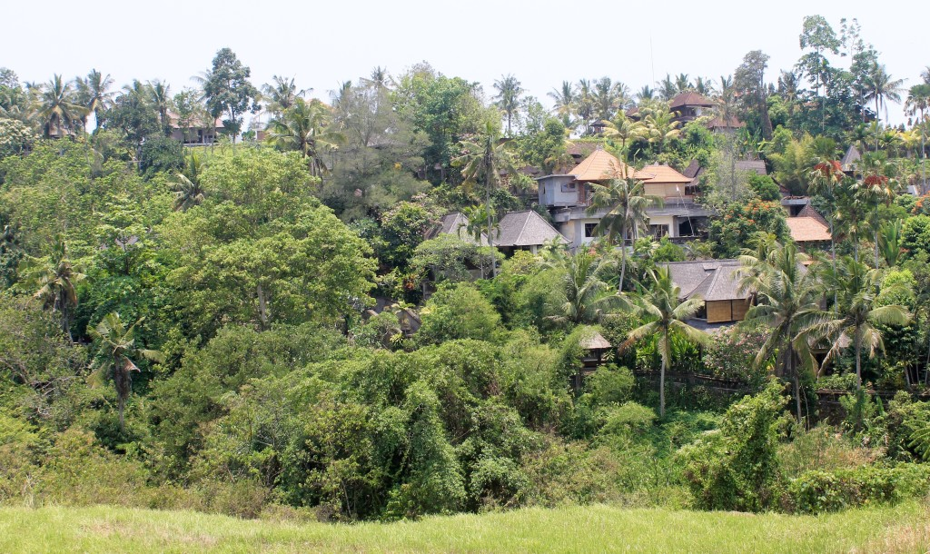 Campuhan Ridge Walk Views Ubud Bali