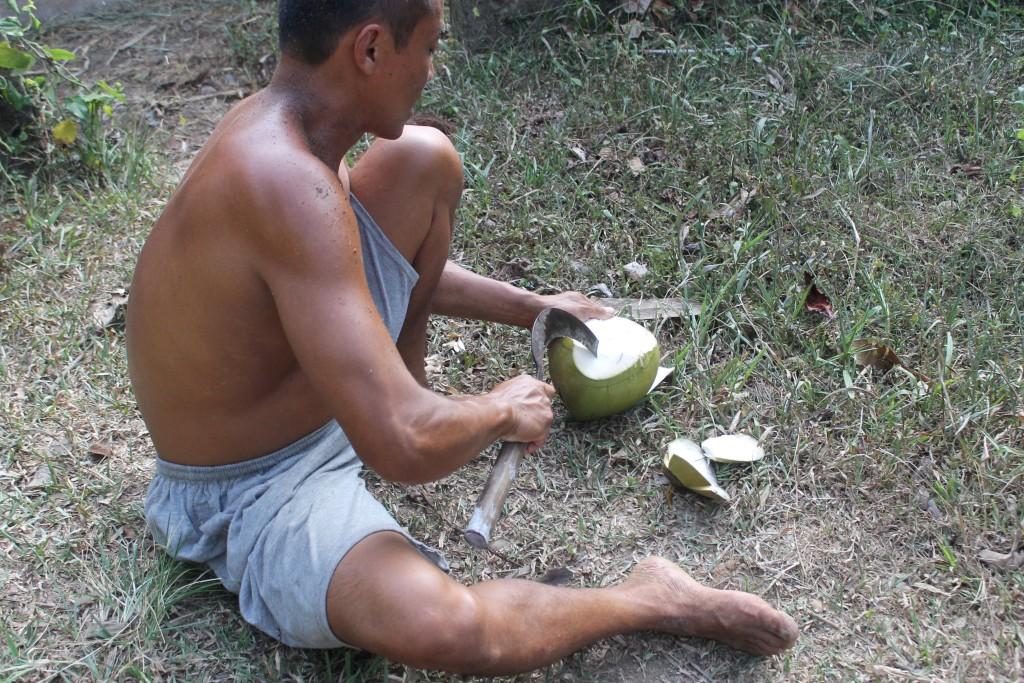 Coconut Rice Paddy Fields Ubud Bali