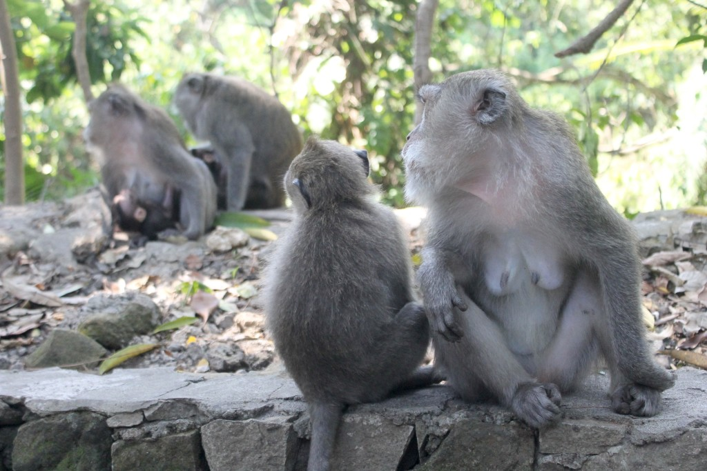 Group Monkey Forest Ubud Bali