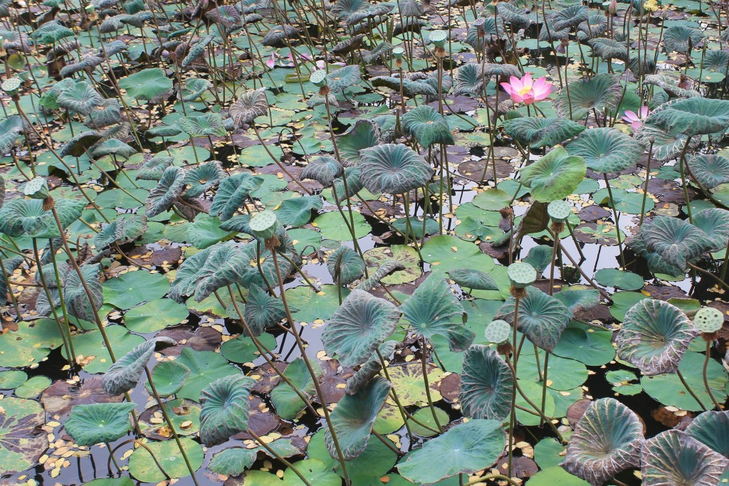 Lotus Pond Sataswati Temple Ubud Bali