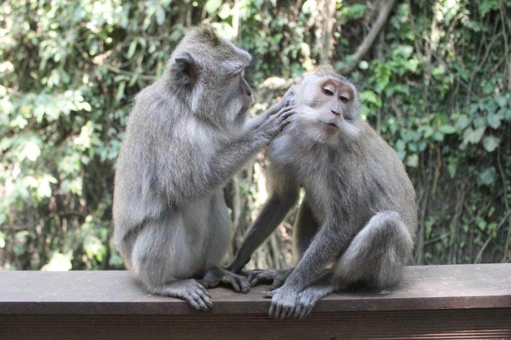 Love Monkey Forest Ubud Bali