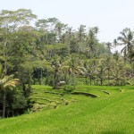 Ubud Daytrip on Motorbike: Top Temples & Rice Terraces