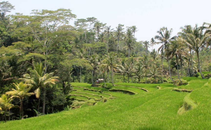 Gunning Kawi Temple Rice Terraces Ubud Bali