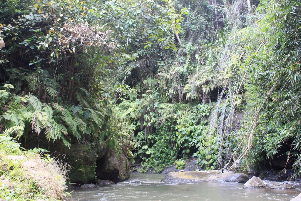 Waterfall Rice Paddy Fields Ubud Bali