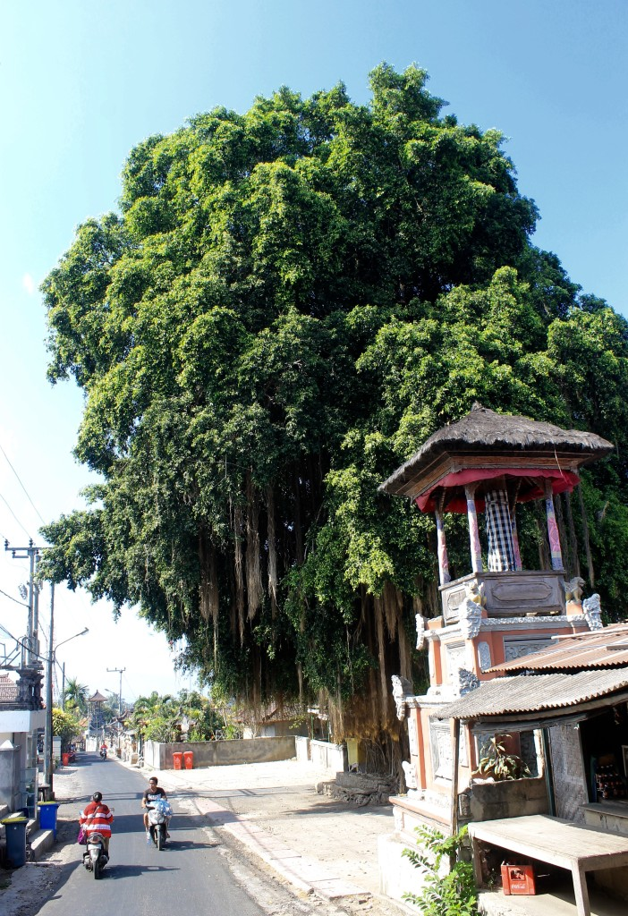 Banyan Tree Nusa Lembongan Bali
