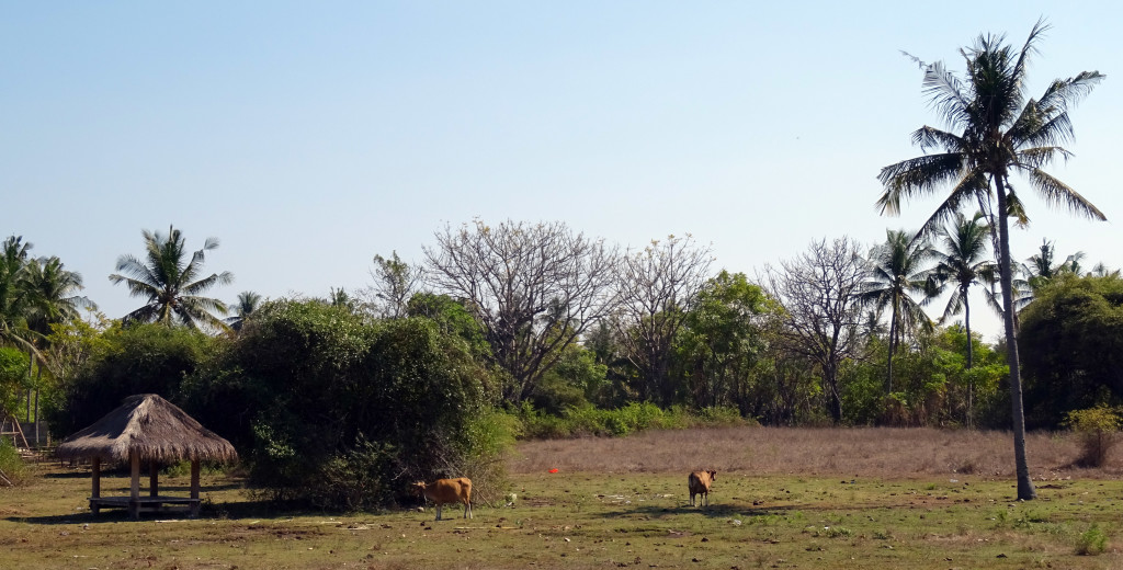 Local livestock