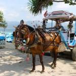 Gili Island Getaway Guide
