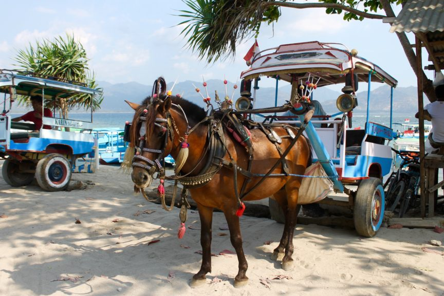 Gili Air Horse Cart