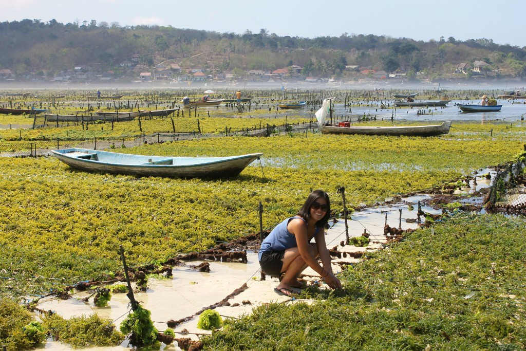 Nusa Lembongan Bali Seaweed Farm