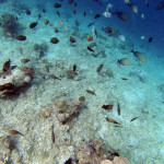 Nusa Lembongan: Three Days in Bali's Island Paradise
