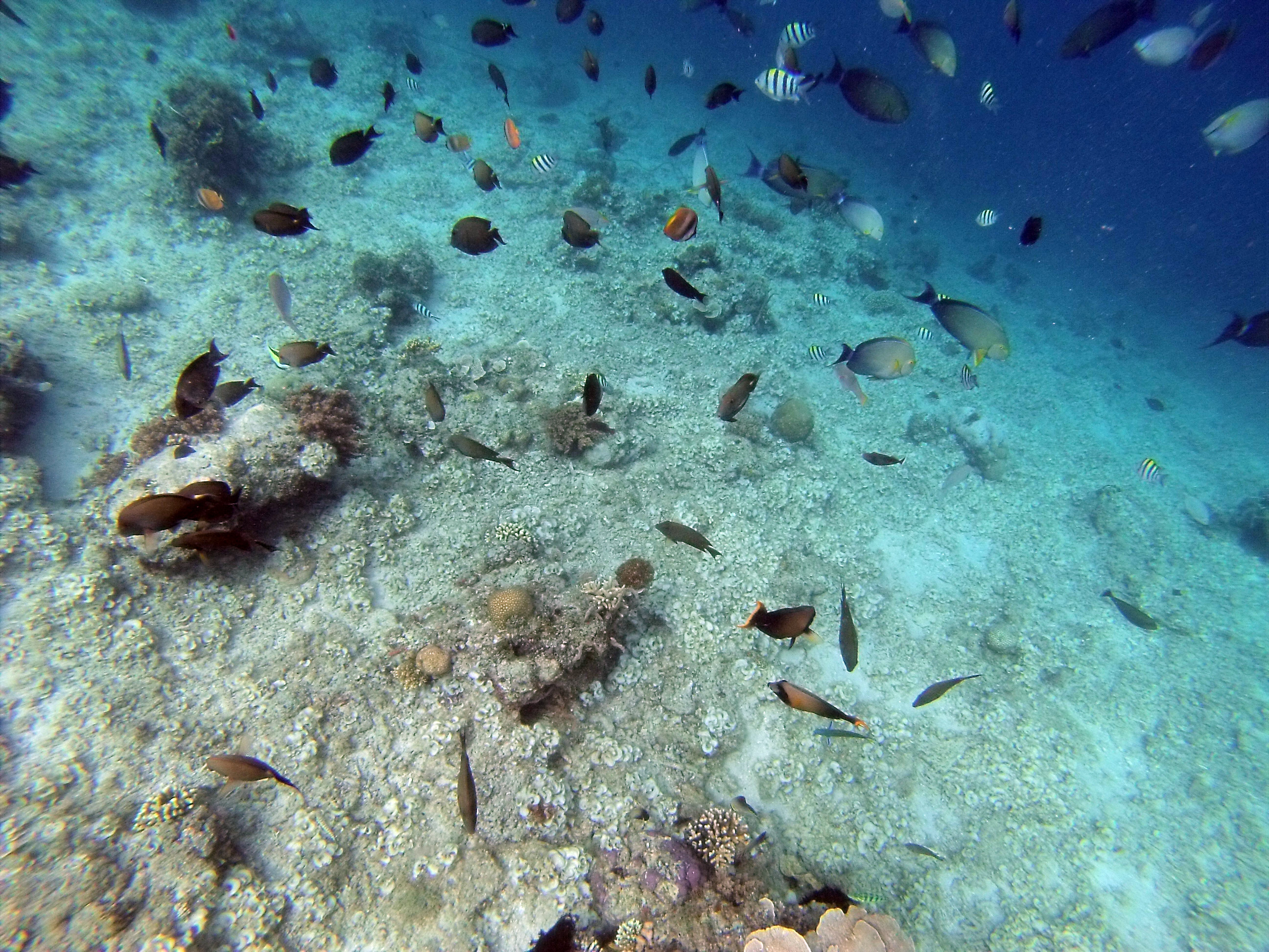 Schools of Fish at Gili Air