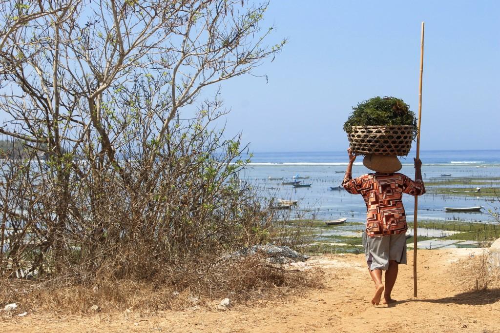 Seaweed Farm Nusa Lembongan Bali