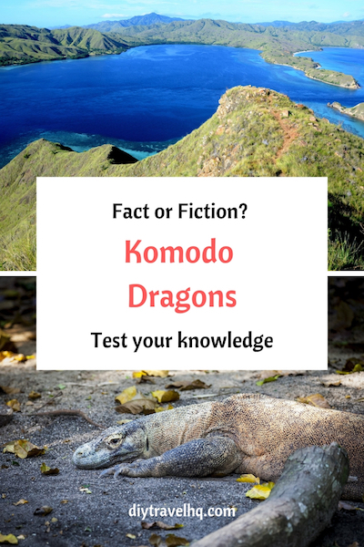 Discover 13 interesting Komodo Dragon facts! Whether you're doing a Komodo Dragon project or you're interested in Komodo Dragon photography learn something new in our new post #komododragon #indonesia #diytravelhq