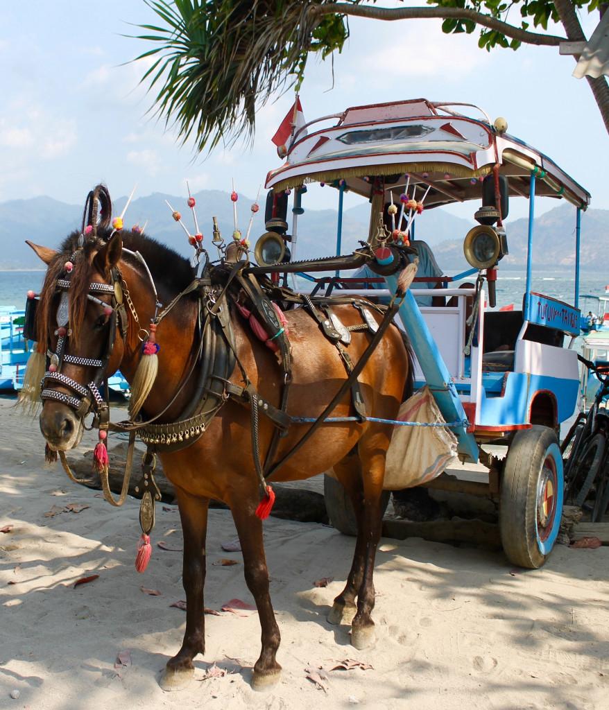 Gili Air Island Horse Cart