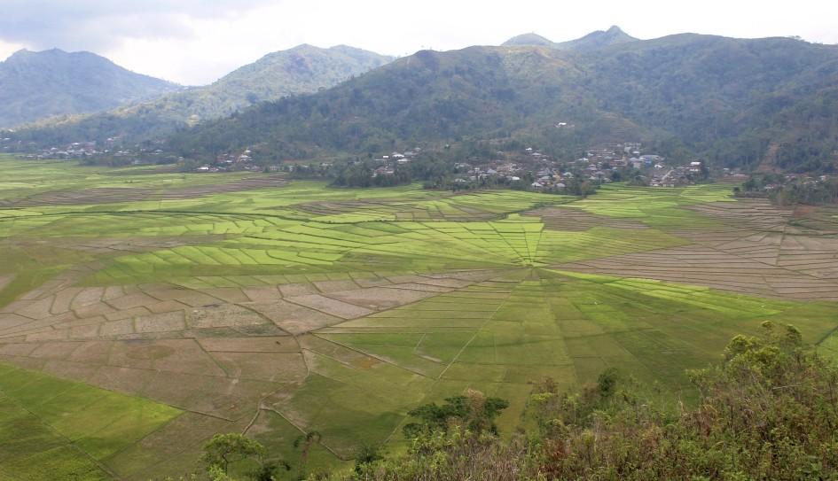 Ruteng Lingko Spider Web Rice Fields