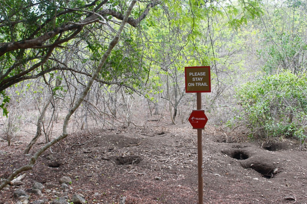 Rinca Island Komodo Dragon Burrows