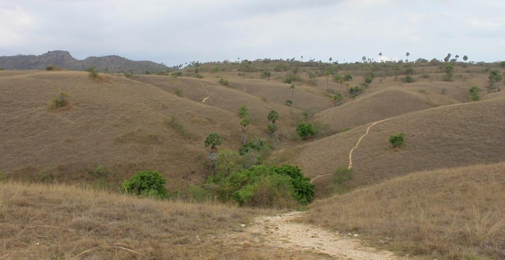 Rinca Island Landscape Views