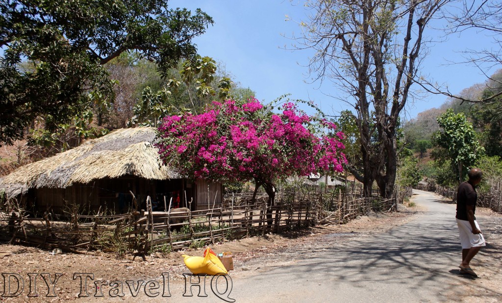 Traditional West Timor Village