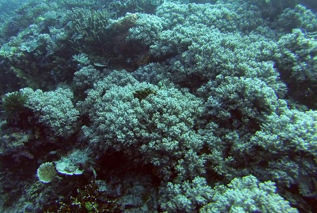 Diving Komodo National Park Coral Garden