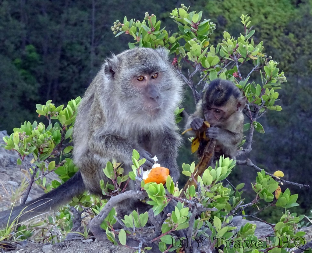 Mt Kelimutu Monkies Foraging