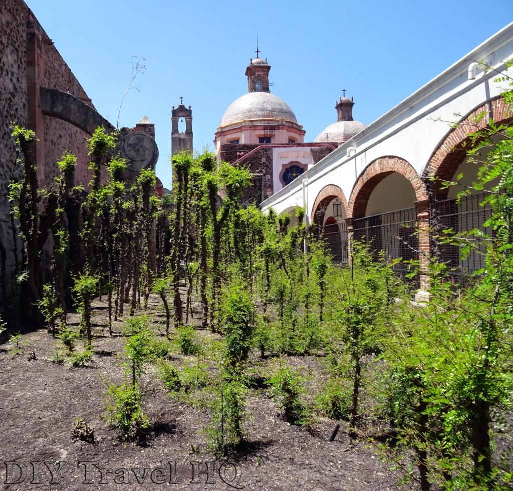 Convento de la Santa Cruz Arbol de la Cruz