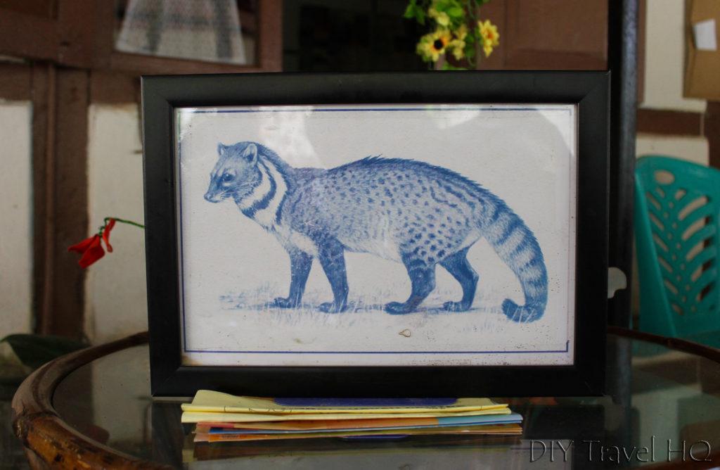 Picture of civet cat