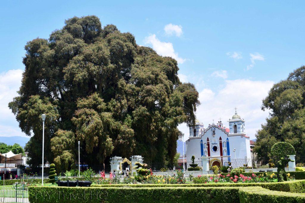 El Tule El Templo de Santa Maria de la Asuncion