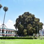 Visit Arbol del Tule, the World's Largest Tree