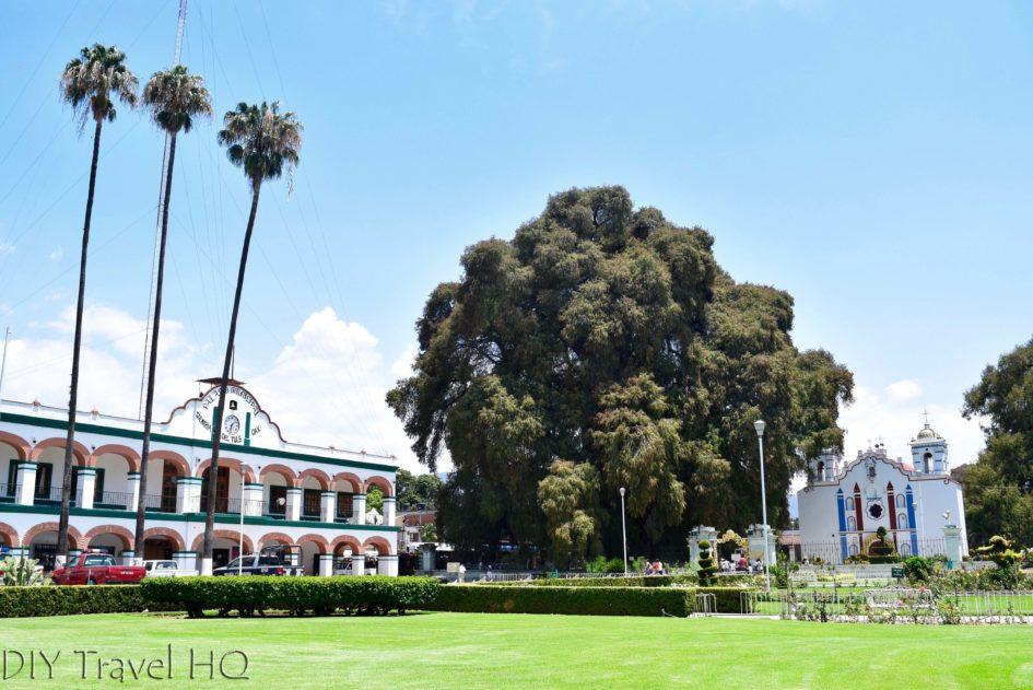 El Tule Tree, Palacio Municipal, and El Templo de Santa Maria de la Asuncion
