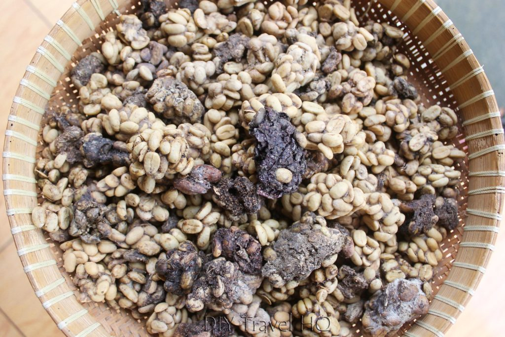 where to find kopi luwak in indonesia diy travel hq