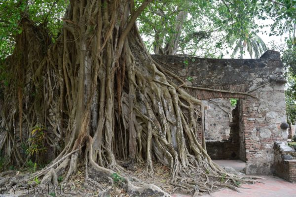 La Antigua Cortez's House Overtaken by Roots