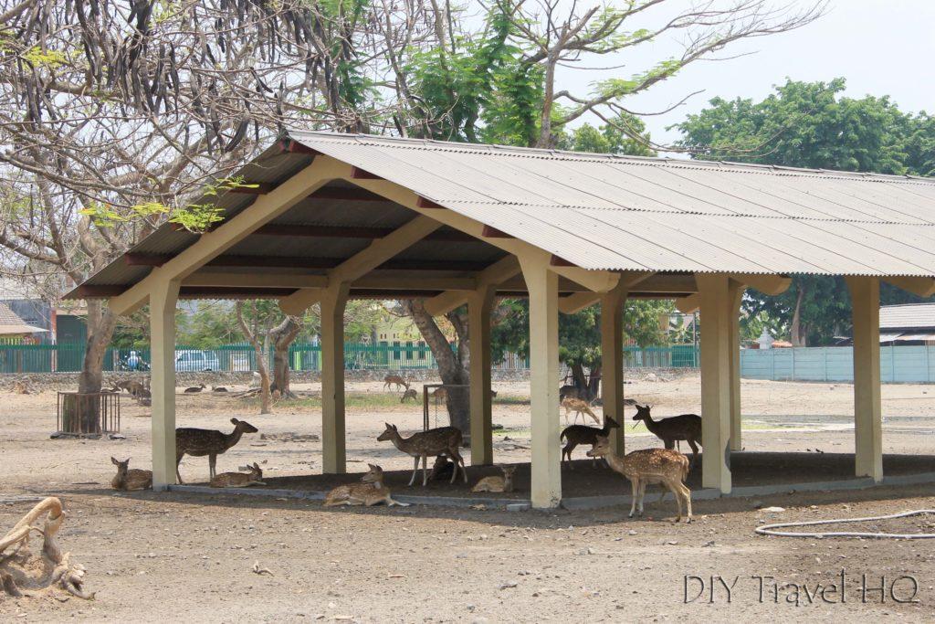 Deer Park at Prambanan Temples
