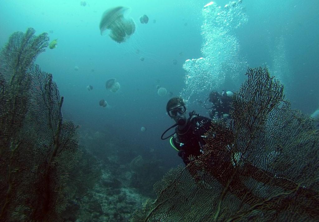 Batee Tokong Dive Jellyfish