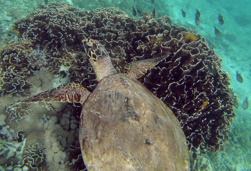 Diving Pulau Weh on a Backpacker Budget