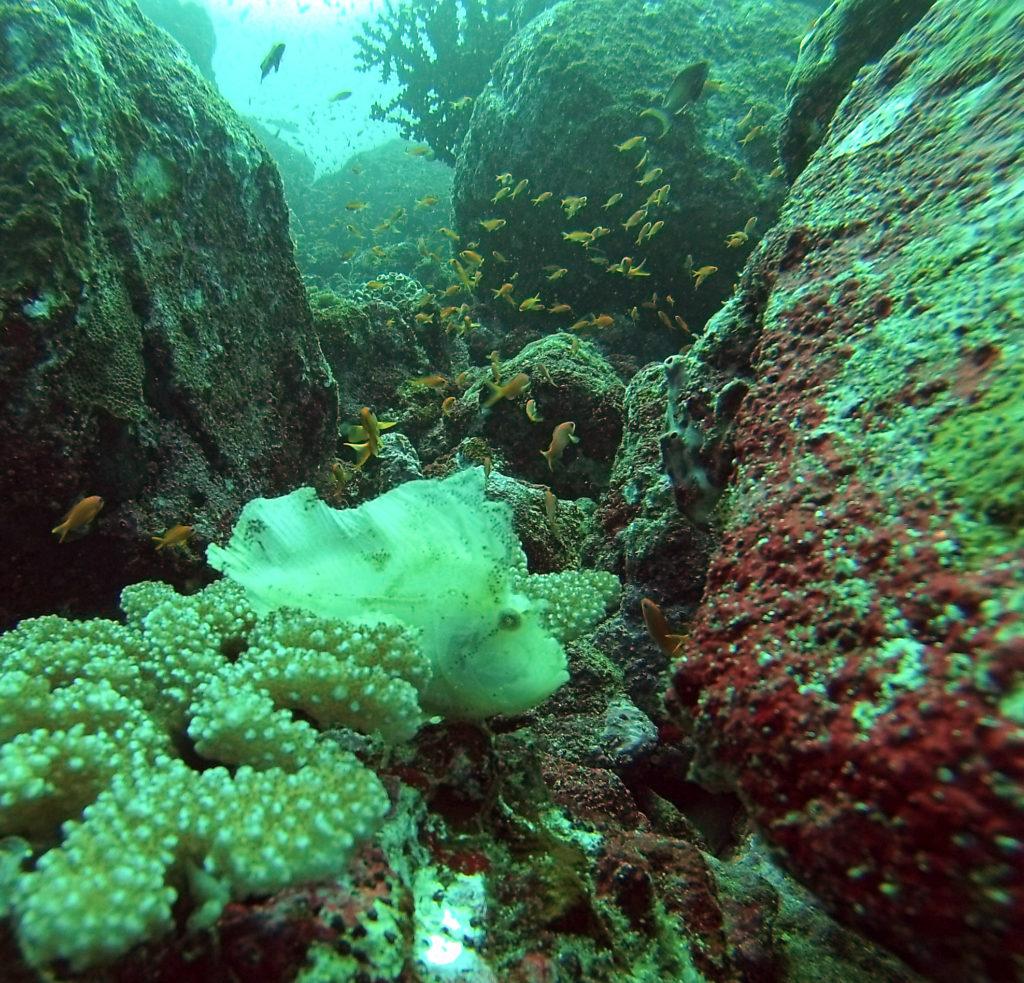 Undercover fish Batee Tokong dive