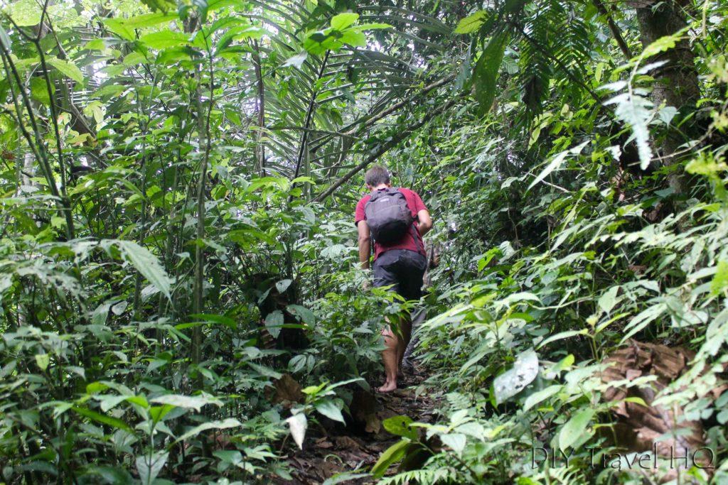 Heading into jungle for Rafflesia