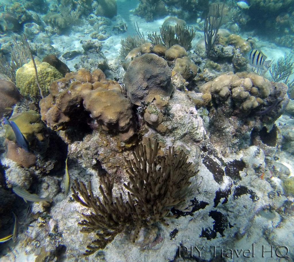 Bay of Pigs Cuba Punta Perdiz