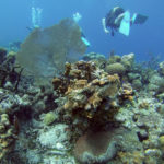 Dive & Snorkel in the Bay of Pigs, Cuba