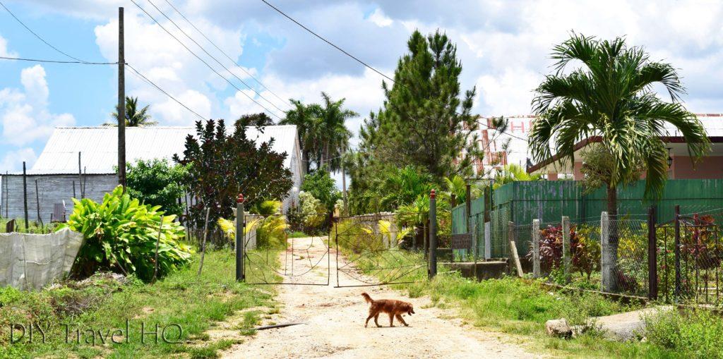Gates to Alejandro Robaina plantation