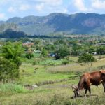 Vinales on a Budget: Things to do & More!
