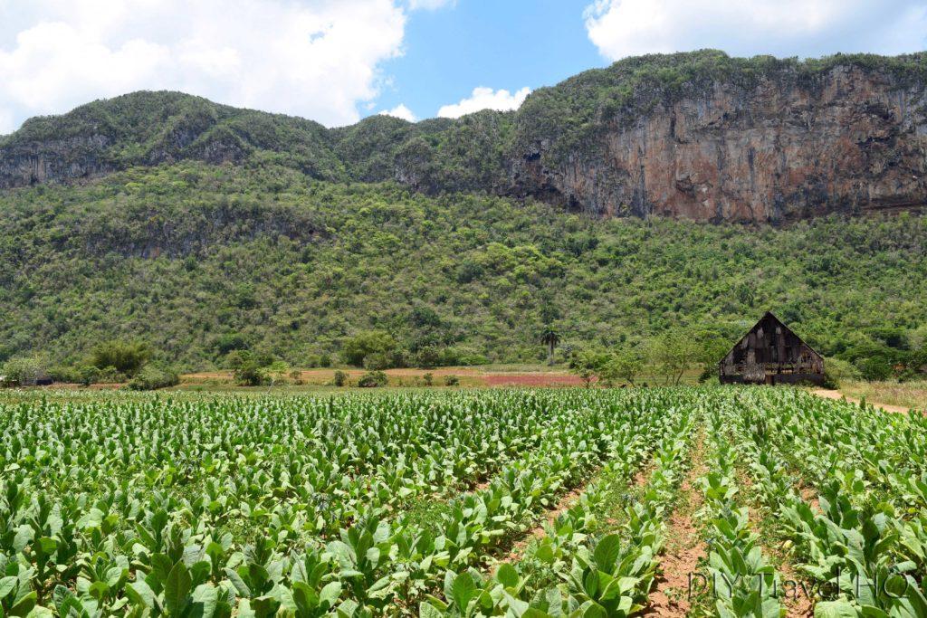Tobacco plantation in Parque Nacional Vinales