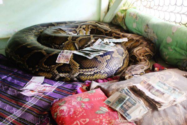 Python at snake monastery