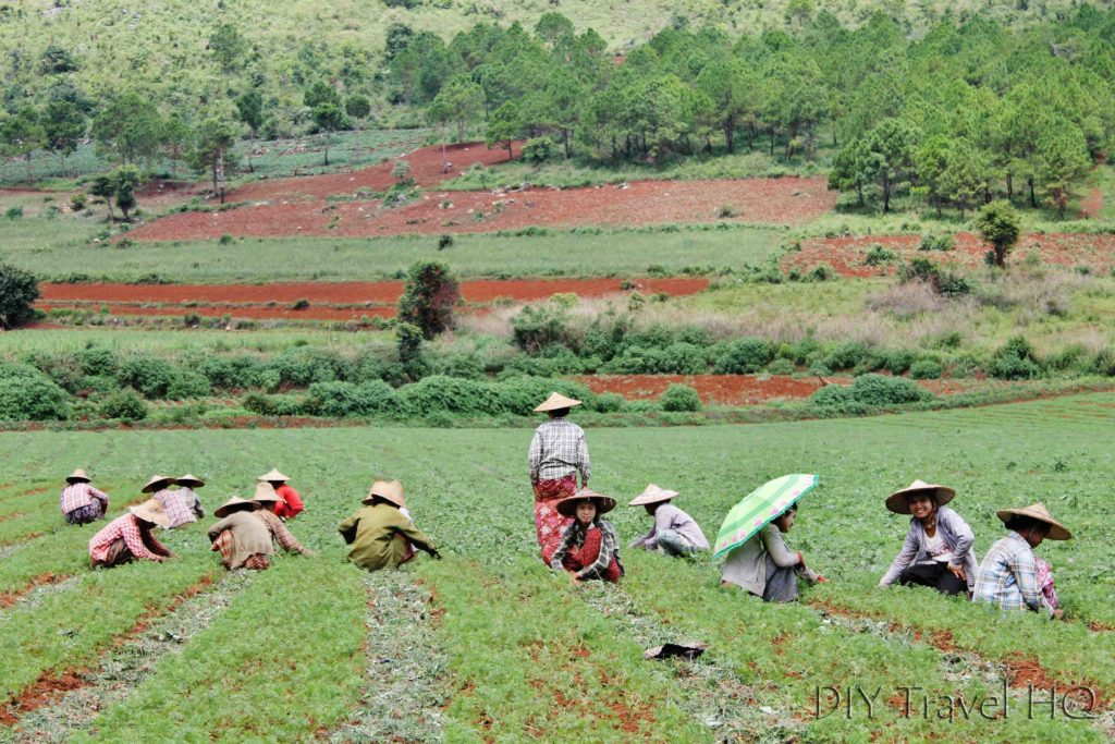 Women farmers in Kalaw