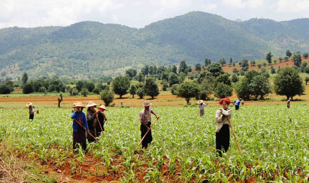 Farmers from Kalaw to Inle Lake