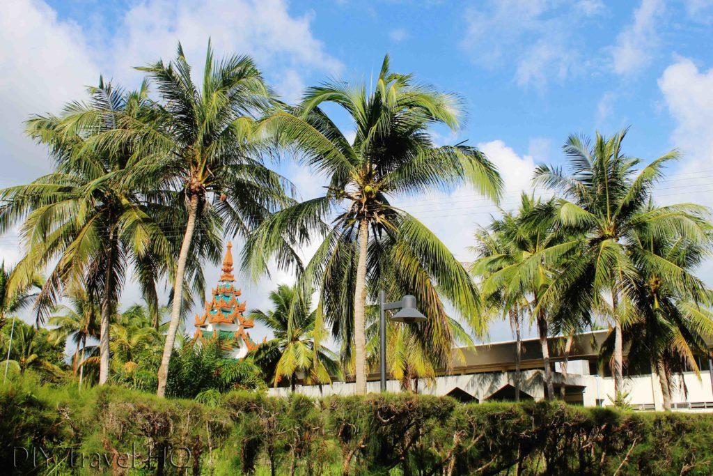 Palm trees at Kawthaung Airport