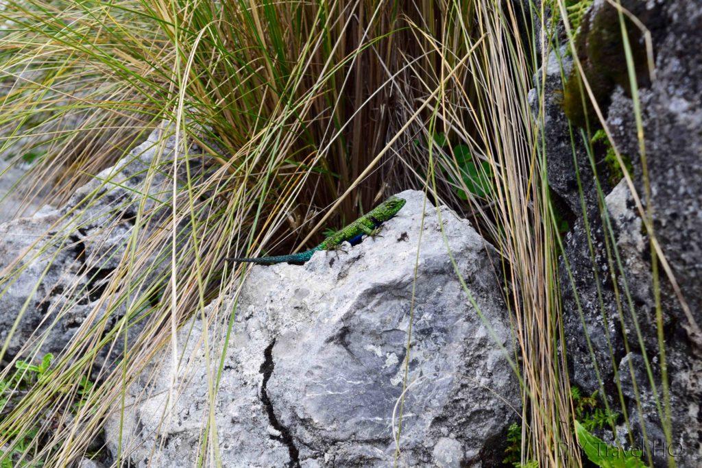 La Torre Hike Lizard