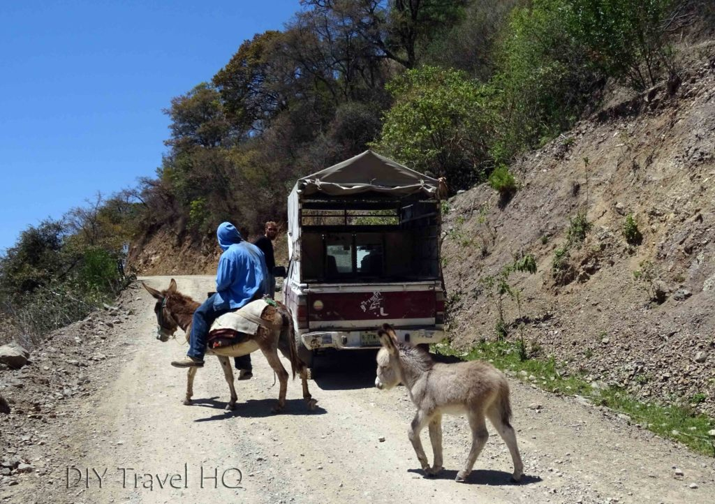Road to Hierve el Agua Donkeys