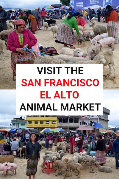 Visiting the San Francisco El Alto animal market is one of the most unique things to do in Guatemala. Check out our post for some crazy photos & find out everything you need to know to plan your trip #sanfranciscoelalto #guatemala #xela