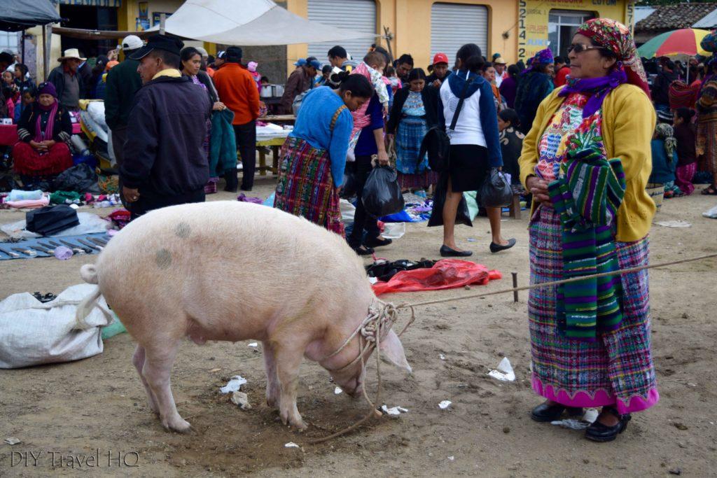 San Francisco El Alto Animal Market Giant Pig with Cool Lady